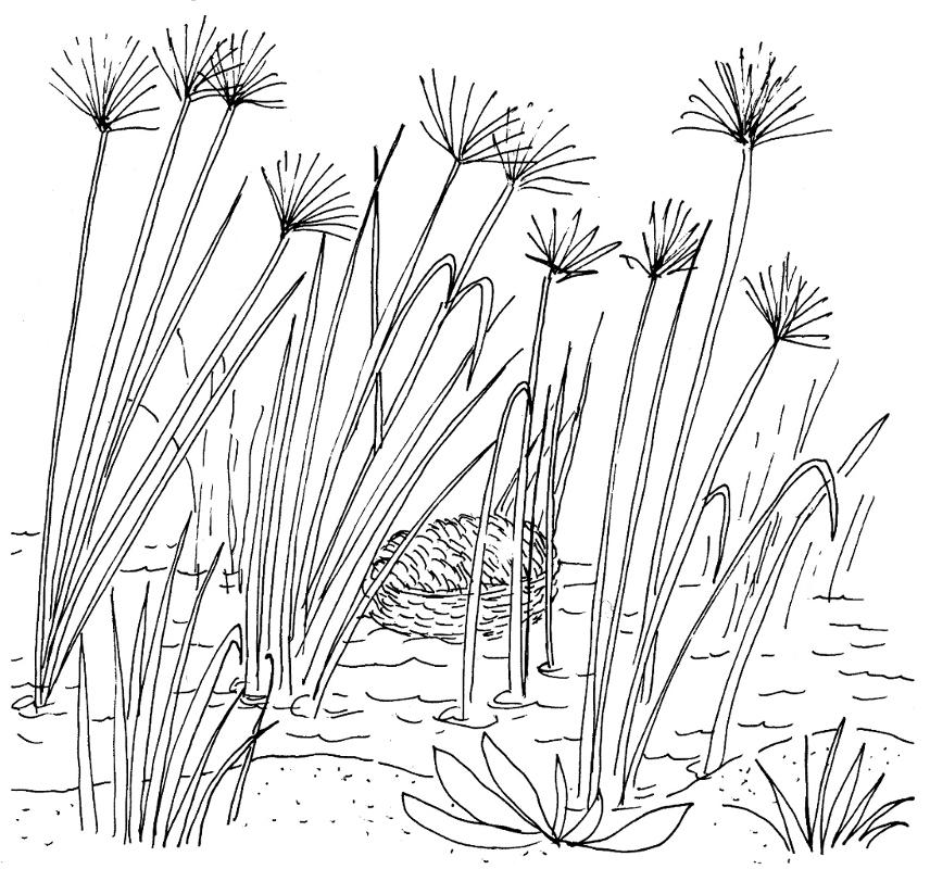comment dessiner des roseaux