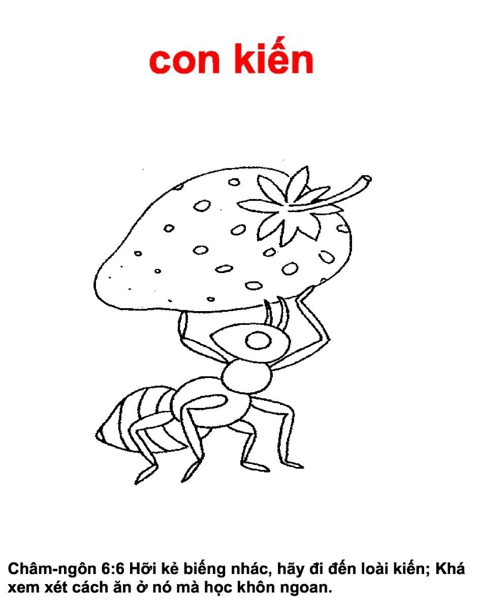 dessin fourmie